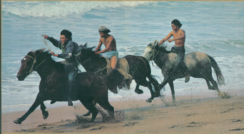 HorsesBeach