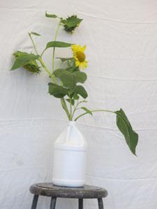 StillLifeSunflower2